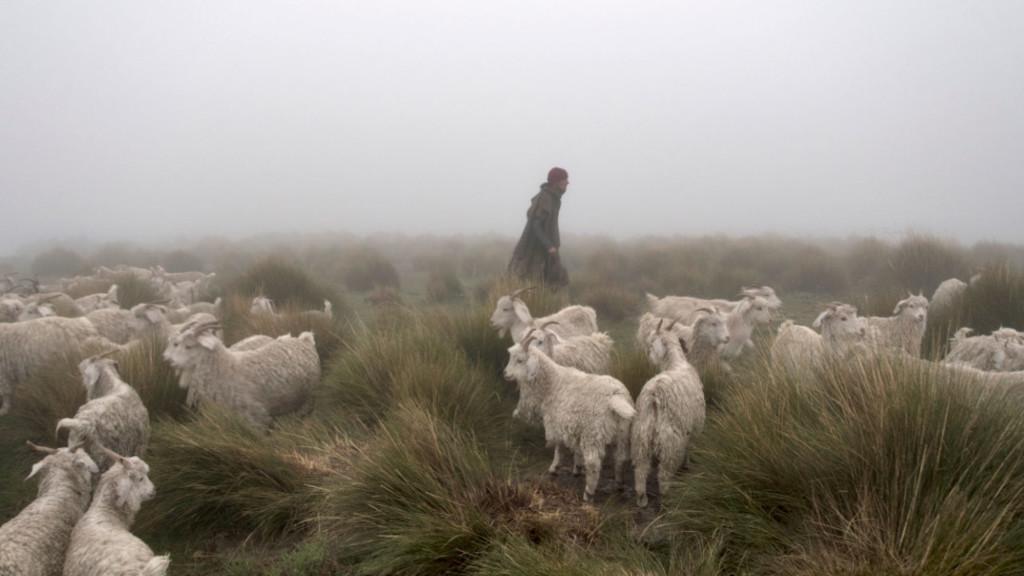shepherdsChaseSeptember2015